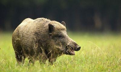 Du khách chết oan vì bị thợ săn bắn do tưởng nhầm là lợn rừng
