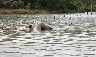 Trục vớt bãi gỗ lậu khủng dưới lòng hồ Thủy điện Sê San