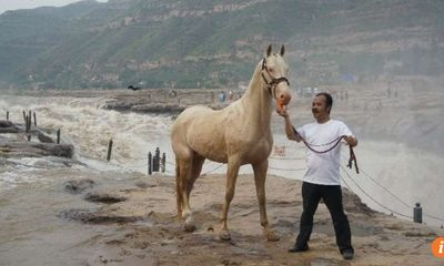 Đại gia mạnh tay chi 300 triệu USD mua giống ngựa