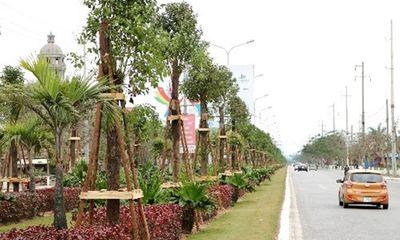 Hải Phòng trồng 1045 cây Long Não trên đường hoa phượng dài nhất Việt Nam