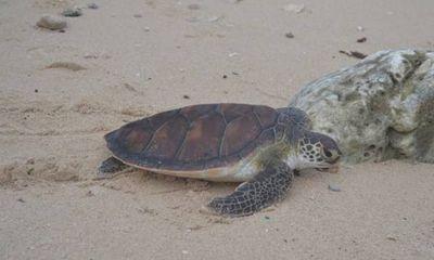 Mua bán rùa biển quý hiếm, một phụ nữ bị phạt 10 triệu đồng