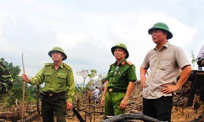Quảng Nam: Lãnh đạo, cán bộ kiểm lâm bị kỷ luật, cách chức vì để xảy ra phá rừng