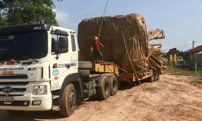 Cục CSGT báo cáo Thủ tướng về xe chở cây