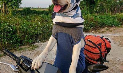 Chú chó 'gây bão' mạng với màn nhớ tên đội bóng, làm toán