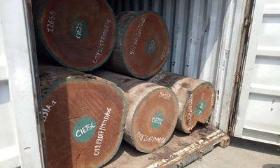 Hơn 7 tấn nghi vảy tê tê được ngụy trang tinh vi trong các khúc gỗ ở cảng Cát Lái