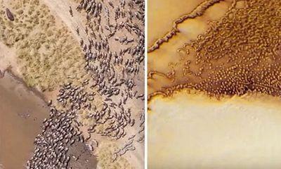 Những đàn động vật ngoài hành tinh khổng lồ xuất hiện trong hình ảnh thăm dò của NASA?