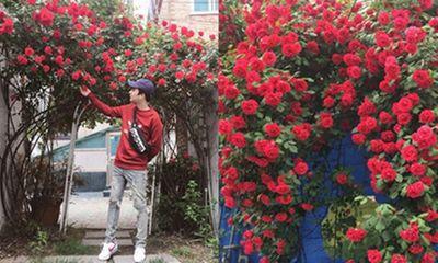 Dân mạng tiếc hùi hụi khi hay tin ngôi nhà có cổng hoa hồng đẹp nao lòng sắp bị bán