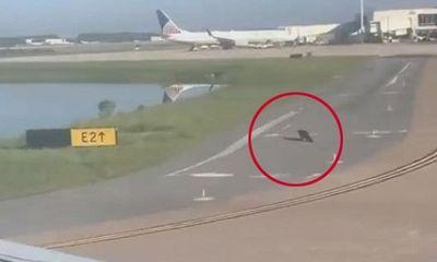 """Hy hữu: Máy bay chuẩn bị cất cánh phải """"nhường"""" đường băng cho cá sấu"""