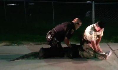 Video: Cảnh sát khống chế cá sấu dài 2,4m trong bãi đỗ xe