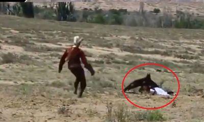 Video: Đại bàng khổng lồ tấn công bé gái 8 tuổi vì tưởng con mồi
