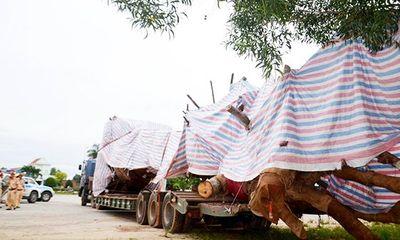 Tình tiết bất ngờ vụ xe chở cây