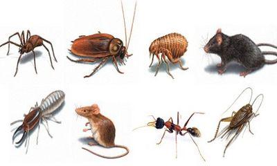Những phương pháp tự nhiên diệt côn trùng hiệu quả mà vẫn an toàn cho sức khỏe gia đình