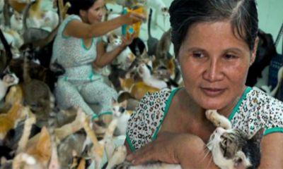 Cuộc sống của người phụ nữ hơn 20 năm nuôi hàng trăm con mèo