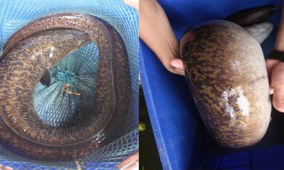 """Clip: Ngư dân Nghệ An bắt được cá chình """"khủng"""" dài 1m"""