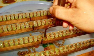 Quy trình khai thác sữa ong chúa