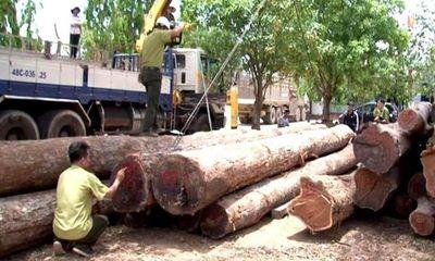 Vụ trùm gỗ lậu Phượng
