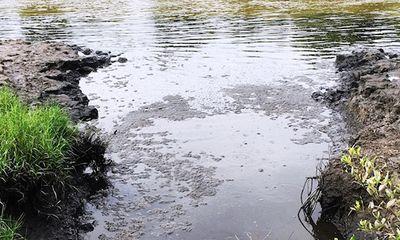 Cà Mau: Xả thải ra môi trường, 4 cơ sở chế biến thủy sản bị phạt hơn 800 triệu đồng