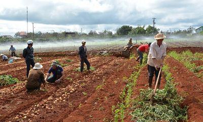 17 cơ sở kinh doanh nông sản Trung Quốc tại Đà Lạt bị điểm tên