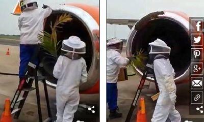 Video: 20.000 con ong