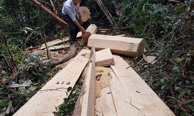 Vụ gỗ lậu ở Mang Yang: Xử lý nhiều cá nhân có liên quan