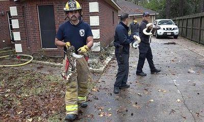 Cháy nhà, lính cứu hỏa đến và giải cứu được... 100 con rắn