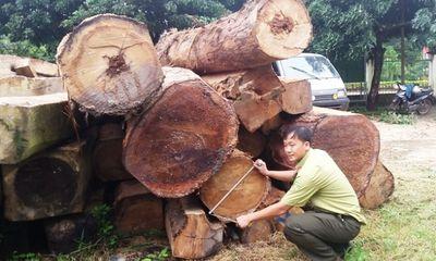 Theo dấu cung đường gỗ lậu lũ lượt đi qua trạm gác rừng, ai