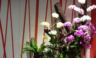 Đại gia Việt chi hàng trăm triệu săn hoa Tết... độc, dị, lạ