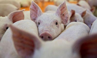 Nóng: Phát hiện 2 ổ dịch tả lợn châu Phi tại Việt Nam