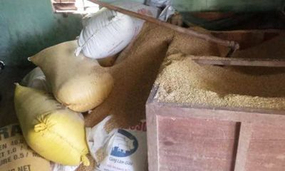 Đi làm về, tá hỏa phát hiện mất 49 cây vàng giấu trong kho lúa