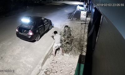 Vụ đôi nam nữ lái ô tô trộm cả cây đào lúc nửa đêm: Lời trần tình bất ngờ của