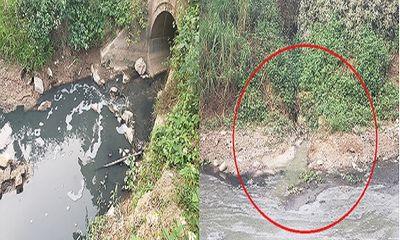 Phúc Thọ (Hà Nội): Dòng sông bốc mùi hôi thối, đặc quánh chất thải quanh năm?