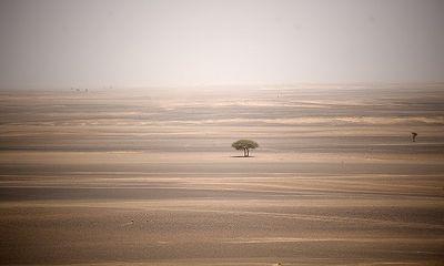 Hi hữu: Cậu bé 5 tuổi sống sót kỳ diệu sau khi bị lạc suốt 24 giờ trong sa mạc Argentina