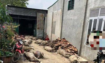 Sự thật tin đồn đào 800 con lợn dịch bệnh lên để bán ở huyện Đắk Mil
