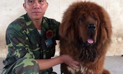 Chuyên gia huấn luyện chó nghiệp vụ: Nếu bỏ chạy, chó sẽ hiểu bạn là con mồi