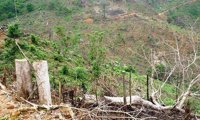 Khởi tố vụ 2 cha con phá 11.300 m2 rừng tự nhiên