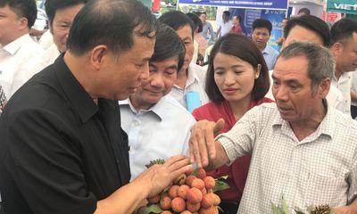 Hải Dương khai mạc ngày hội vải thiều Thanh Hà năm 2019