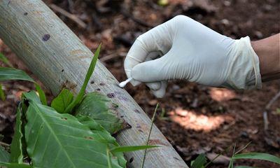 Vụ 3 bà cháu bị sát hại, chôn xác trong vườn cà phê: Nữ nghi phạm khai ra tay bất ngờ