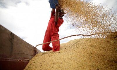Căng thẳng thương mại kéo dài, Trung Quốc chính thức dừng nhập khẩu đậu tương Mỹ