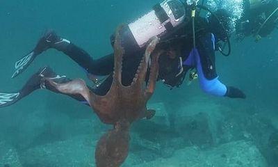 Video: Bạch tuộc khổng lồ tấn công thợ lặn dưới biển