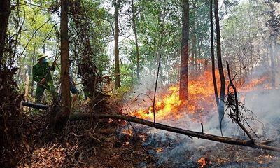 Lại xảy ra cháy rừng tại Hà Tĩnh, hàng trăm người tham gia dập lửa