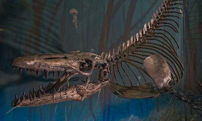 Tìm thấy hóa thạch của quái vật đại dương từng tồn tại khoảng 70 triệu năm trước