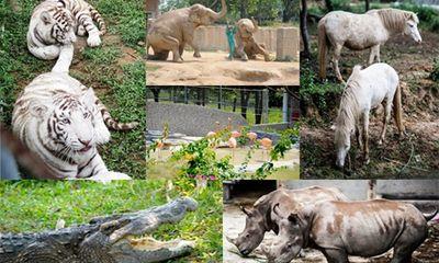 Vườn thú đẳng cấp của