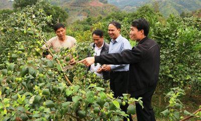 Kinh tế hợp tác trong phát triển nông nghiệp Sơn La, dưới góc nhìn nghiên cứu