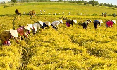Tăng cường năng lực lao động nông thôn phục vụ khởi nghiệp nông nghiệp công nghệ cao, tham gia chuỗi giá trị nông sản toàn cầu (Phần I)