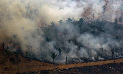 Video: Thảm cảnh sau cháy rừng tại khu bảo tồn rộng 160.000 ha tại Bolivia