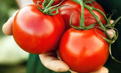 Đừng cho cà chua vào tủ lạnh, đây mới là cách bảo quản tốt nhất