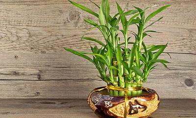 Muốn tài lộc gõ cửa đừng quên trồng 5 loại cây may mắn này trong nhà