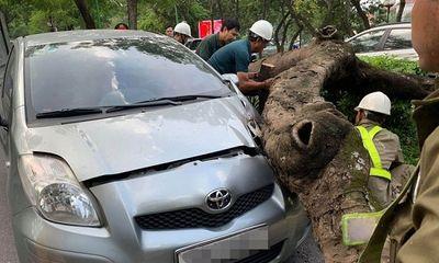Hà Nội: Cây xanh bật gốc đổ xuống, đè trúng đầu ô tô đang lưu thông