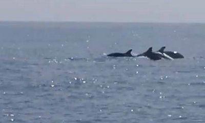 Ly kỳ chuyện về đàn cá heo cứu 41 ngư dân bị lật thuyền giữa biển khơi