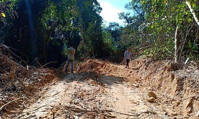 """Ai đứng đằng sau việc """"xẻ núi, bạt rừng"""" mở đường vào cánh rừng nguyên sinh ở Thừa Thiên-Huế?"""